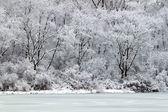 Pierce Lake Snowfall - Illinois — Stock Photo