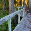 Swamp Boardwalk - Florida — Stock Photo