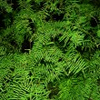 Vegetation Background - Stock Photo