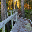 Swamp Boardwalk - Florida - Stock Photo