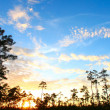 Everglades Forest Sunset - Stock Photo