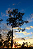 Everglades Forest Sunset — Stock Photo