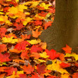 Fall Colors Background - Stock Photo