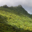 El Yunque National Forest - Stock Photo