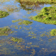 Wetland Background — Stock Photo