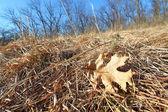Prairie Scene - Illinois — Stock Photo