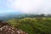 Puerto Rican Rainforest — Stock Photo