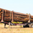 Logging Trailer - Florida — Stock Photo