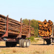 Logging Trailers - Florida — Stock Photo