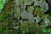 Mossy rock background — Stock Photo