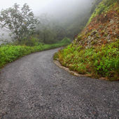 Foggy Puerto Rico Road — Stock Photo