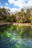 Wekiwa Springs in Florida — Stock Photo