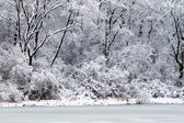 Pierce Lake Snowfall - Illinois — Stock Photo