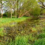 Flooded Wetland - Illinois — Stock Photo