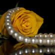 Stock Photo: Rose and pearl beads