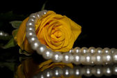 Rose and pearl beads — Stock Photo