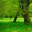 Green tree and moss - Stock Photo