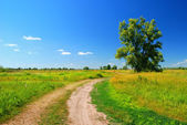 Alone tree and dirt road in lea — Stock Photo