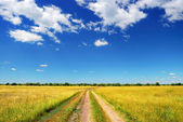 Country road in summer field — Stock Photo