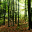 Forest and sun beams - Stock Photo