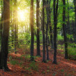 Magic forest and sun beams - Stock Photo