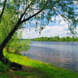 Tree near water of river — Stock Photo #6532994