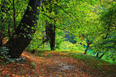 Path and leaves in autumn park — Stock Photo