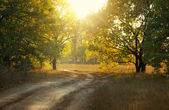 Dirt road in autumn park — Stock Photo