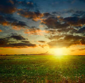 Summer sunset landscape — Stock Photo