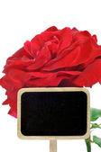 Een rode roos — Stockfoto