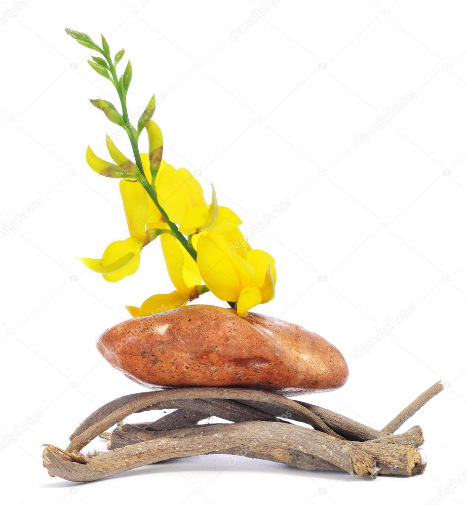 A pile of stone, branches and flowers  Stock Photo #5559379