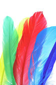 Feathers of different colors — Stock Photo
