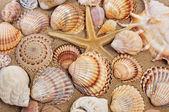 Seashells and seastar on the sand — Stock Photo