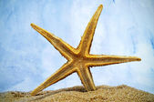 Estrela do mar na areia — Fotografia Stock