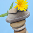 Zen stones and daisy — Stock Photo