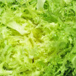 Escarole endive — Stock Photo #5830201
