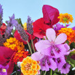 Stock Photo: Spring flowers