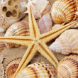 Stock Photo: Seashells and seastar