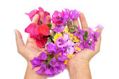 Hands full of flowers — Stock Photo