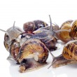 Stock Photo: Land snails