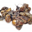 Land snails — Stock Photo #6581738