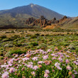 Mount Teide, in Teide National Park, Tenerife, Canary Islands, S — Stock Photo