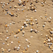 Small seashells over sand — ストック写真