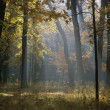 Forest Autumn — Stock Photo #5632524