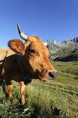 Cow world — Stock Photo