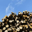 Stock Photo: Woodpile and sky