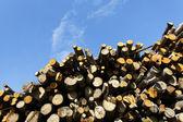 Woodpile and sky — Stock Photo