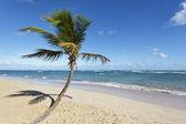 Beach palm and sky — Stock Photo