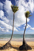 Two palm trees — Stock Photo