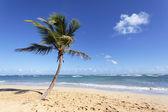 The palm tree — Stock Photo